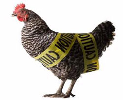 Beware the New Bird Flu (photo: wikipedia)