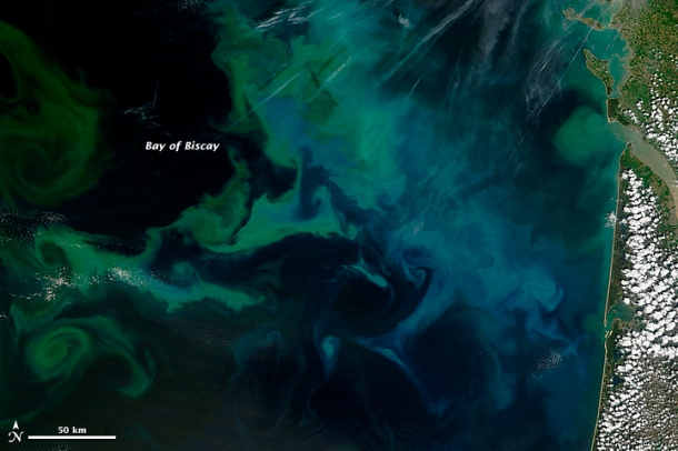 Natural-color picture taken on May 4 by NASA's Terra satellite shows phytoplankton blooms off the coast of France Image credits: Live Science / NASA Earth Observatory